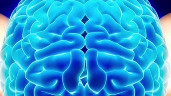 Кнопки мозга