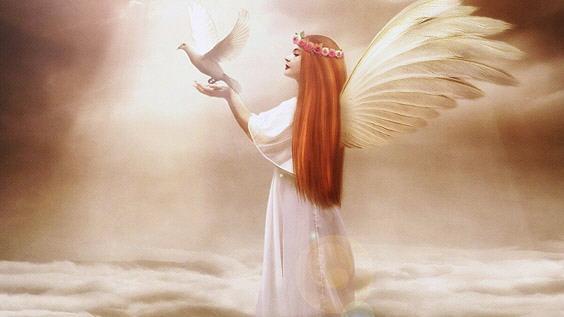 Любви крылья никогда не мешают